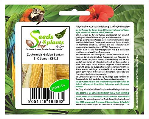 Stk - 6x Zuckermais Golden Bantam EKO- Mais Samen Saatgut Pflanze Gemüse KS415 - Seeds Plants Shop Samenbank Pfullingen Patrik Ipsa