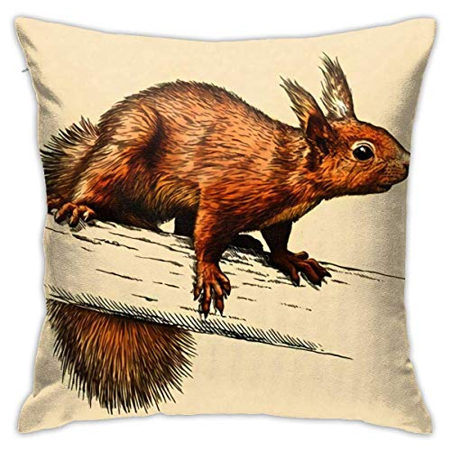 Square Throw Pillow Case Engrave Squirrel Sketch Linear Art Cushion Cover 45X45CM