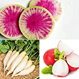 Variety Pack of Radish Seeds for Planting | Heirloom & Non-GMO Vegetable Seeds | Cherry Belle, White Icicle, Watermelon Radish Seeds | Planting Instructions Included