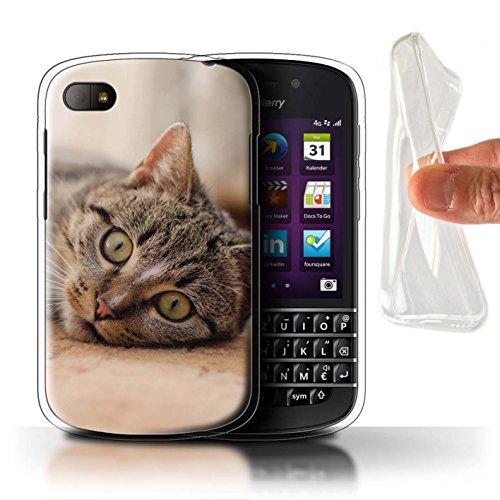 Stuff4 Custodia/Cover/Caso/Cassa Gel/TPU/Prottetiva Stampata con Il Disegno Razze Feline/Gatti Popolari per Blackberry Q10 - Gatto Soriano
