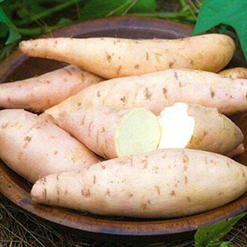SVI Frische 50pcs Süßkartoffel Gemüsesamen für die Pflanzen-Creme