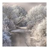 Bilderwelten Fotomural Premium - Winter Song - Mural cuadrado papel pintado fotomurales murales pared papel para pared foto 3D mural pared barato decorativo, Tamaño: 240cm x 240cm