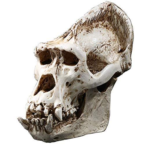 Rhelf Home Crafts Decoración Animal Dinosaurio Cráneo Espécimen Altamente imitación Modelo de resina interior Retro Decoración Humano Skull Replica Halloween Orangutan Skull Skeleton Head Realista Res