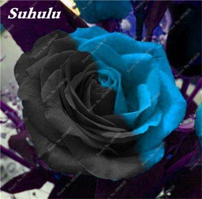 De nouvelles semences 2017! 24 Couleurs Rose Graines Plantes vivaces Rose pot de fleurs Graines cour et balcon extérieur Plant-150 Pcs 23