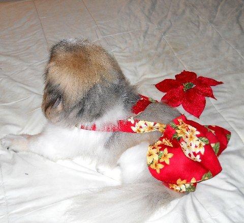 Joybies Jupe Courte pour Chien Femelle Large - 17-19 Pouces Rouge avec Graphique Floral