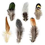 Best Feathers - Coceca 180pcs 6 Styled Feathers Assorted Mixed Feathers Review