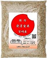 発芽玄米 1kg  ドライタイプ 無洗玄米