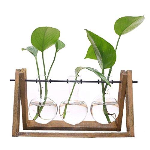 SODIAL Terrario de planta con soporte de vaso de vidrio de soporte de madera para la decoracion del hogar, Contenedor de Scindapsus (3 terrarios)