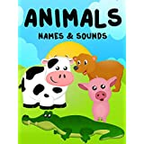 Animals - Animals Names and Sounds - Animals For Kids
