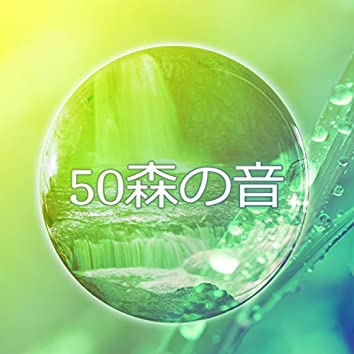 50森の音: 木の擦れる音、風、雨、鳥の音、コオロギ音、キツツキ