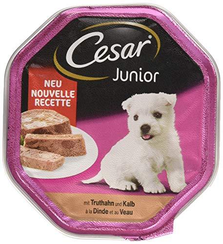 Cesar - Nourriture pour Chien - Junior - pour Chiots et Jeunes Chiens 1 Ans - avec Dinde et calb dans la pâte - 14 Bols (14 x 150 g) - 2100 g
