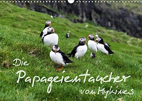 Die Papageientaucher von Mykines (Wandkalender 2021 DIN A3 quer)