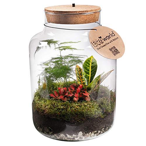 Ecoworld Tropical Biosphere - Flachengarten mit Beleuchtung - LED-Lampe - 3 farbige Zimmerpflanzen - Basic Glas XL - Ø 22 cm - Höhe 33 cm