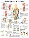 3B Scientific VR3174L Póster Anatómico, la Articulación de la Rodilla