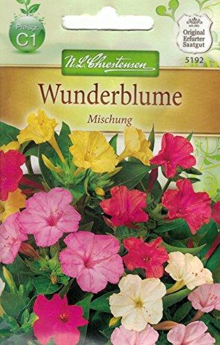 Chrestensen Wunderblume 'Mischung'