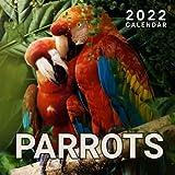 Parrots 2022 Calendar: 18 Months ,July 2021 - dec 2022 Calendar, 8.5 x 8.5 Inch Monthly View- Bird 2022 Calendar