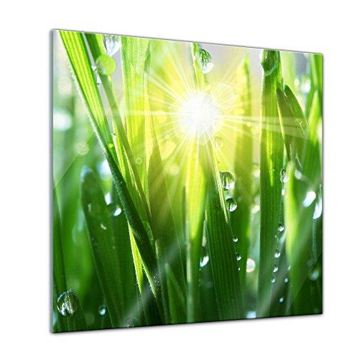 Glasbild - Gras II - 30x30 cm - Deko Glas - Wandbild aus Glas - Bild auf Glas - Moderne Glasbilder - Glasfoto - Echtglas - kein Acryl - Handmade
