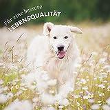 AniForte® PureNature Nassfutter 400g Wild Forest Hundefutter- Naturprodukt für Hunde (Frisches Wild, 6x400g) - 6