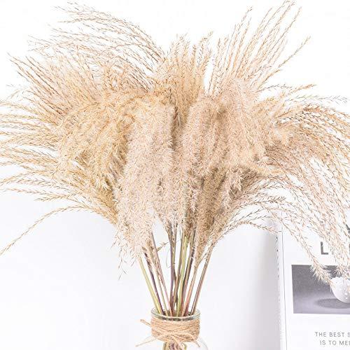 WHK 100/50 Stück getrocknetes Schilf - Pampasgras, Phragmiten Blumenstrauß Blumenarrangement für Hochzeit