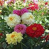 Fuduoduo Maceta para Plantas De JardíN/Interiores,Semillas de Flores pequeñas de Plantas fáciles de vivir-400PCS_Bloom,Raras Semillas De CéSped