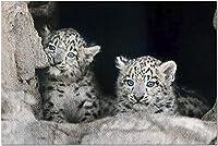 HD 2つのかわいいユキヒョウの赤ちゃんカブの肖像画9003436(大人のためのプレミアム500ピースジグソーパズル52x38cm)
