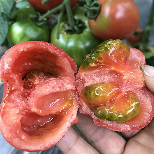 500 Tomatensamen Antivirus-Erdbeer-Tomatensamen Tomate