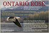 ONTARIO ROSE (English Edition)