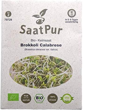 SaatPur Bio Keimsaat - Brokkoli Keimsprossen Sprossen Microgreen - 20 g Lebensmittel Qualität