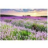 Lavendel garten sonnenuntergang wandbild -3d tapete benutzerdefinierte vlies 3d raum tapeten aufkleber 3d malerei fototapete für wände 280 cm B x 230 cm H