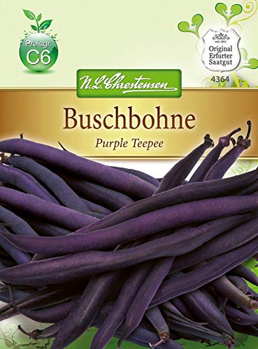 N.L. Chrestensen 4364 Buschbohne Purple Teepee Glucktyp (Buschbohnensamen)