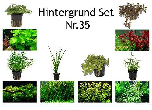 Tropica Hintergrund Set mit 6 Topf Pflanzen Aquariumpflanzenset Nr.35 Wasserpflanzen Aquarium Aquariumpflanzen