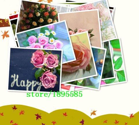 Plantes Nouvelle arrivée Zinnia Seeds vivace à fleurs en pot Charme Fleurs chinois Seeds 100 particules / lot