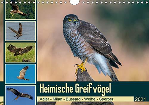 Heimische GREIFVÖGEL Adler Milan Bussard Weihe Sperber (Wandkalender 2021 DIN A4 quer)