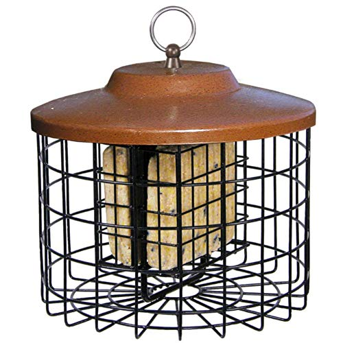 Top squirrel cage bird feeder for 2020
