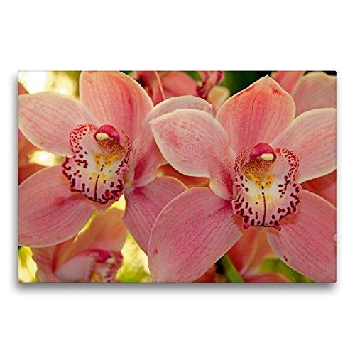 Premium Textil-Leinwand 75 x 50 cm Quer-Format Orchideen | Wandbild, HD-Bild auf Keilrahmen, Fertigbild auf hochwertigem Vlies, Leinwanddruck von Klaus Lielischkies