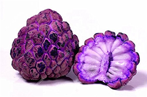 10pcs/sac de sucre rares Graines Bonsai Annona squamosa Plante en pot tête Fruit de Bouddha Custard Planta Garden Décor 1