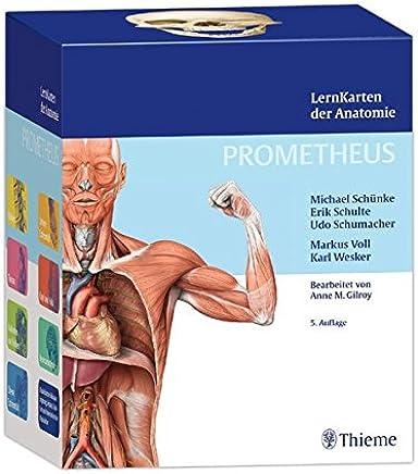 Schünke, M: PROMETHEUS LernKarten der Anatomie