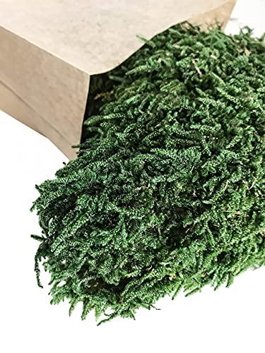 Bkegidaf Muschio Stabilizzato Naturale Piatto qualità Premium Ideale per Parete Vegetale Decorazioni Casa Giardino Verticale Quadri Vegetali Modellismo Quadro Presepe Natale Diorama Fai da Te 50gr