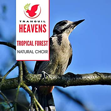 Tropical Forest - Natural Choir