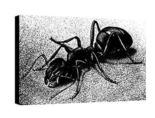 Quadro intelaiato Pronto da Appendere Escher 22 cm 35x50 Stampa su Tela Canvas Vendita Falsi di Autore Il Negozio di Alex