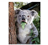 Zhy Silly Koala 5D DIYダイヤモンドペインティング、クロスステッチ、5Dダイヤモンドペインティングフルドリル、 刺繡、ギフト、30x40cmのダイヤモンドペインティングキット