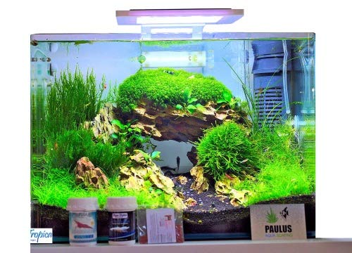 Blau Aquaristic - Nano-Aquarium Square 28 Liter - Starter Komplettset LED, Filter