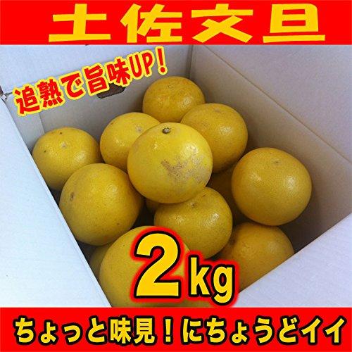 追熟で旨味UP! ご家庭用訳あり土佐文旦 サイズS〜2L(2kg)高知県産 2月中旬より出荷開始です!