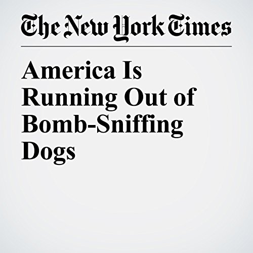 America Is Running Out of Bomb-Sniffing Dogs copertina