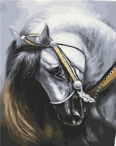 Pintura por números imágenes de caballos sin marco pintura al óleo por números Kit de pintura de animales lienzo decoración del hogar A21 40x50cm