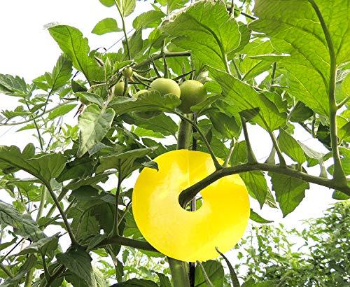 Greenvass Disctrap Piège auto-adhésif pour contrôle des insectes en arbore et pot en extérieur Lot de 10 unités. (Bleu foncé)