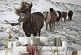 Vlies Fototapete Fotomural - Wandbild - Tapete - Islandpferde Herde Eisig Boden - Thema Tiere - XL - 368cm x 254cm (BxH) - 4 Teilig - Gedrückt auf 130gsm Vlies - 1X-32434V8