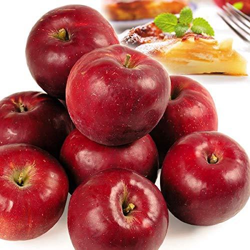 国華園 青森産 紅玉 5kg 1箱 りんご