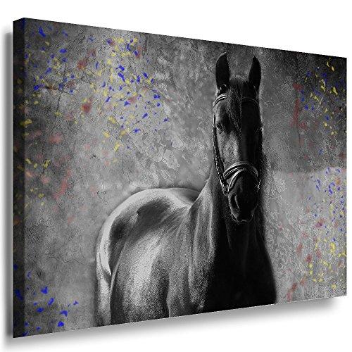 Julia-Art Leinwandbilder - Schwarzes Pferd Bild 1 teilig - 70 mal 50 cm Leinwand auf Rahmen - sofort aufhängbar Wandbild XXL - Kunstdrucke QN170-3