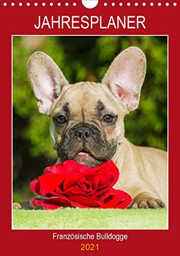 Jahresplaner Französische Bulldogge (Wandkalender 2021 DIN A4 hoch)